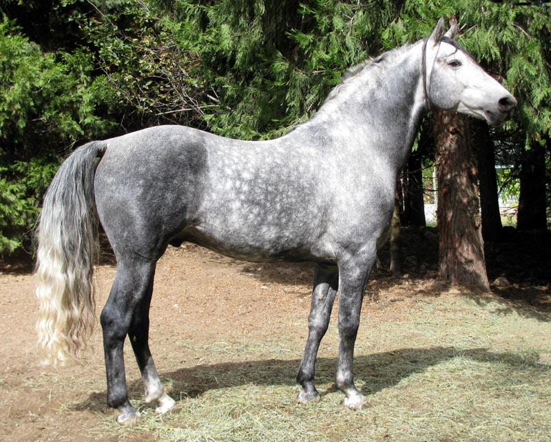 Getting back on the horse (nc17) RdksKnighthawksm