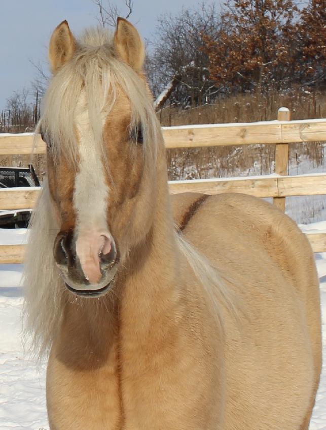 Dunalino Foal